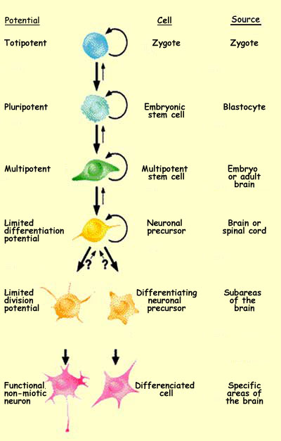proliferation examples