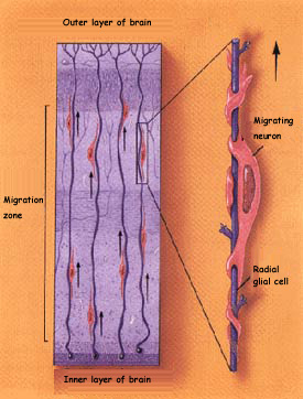 Cell Stem Cell  ScienceDirectcom