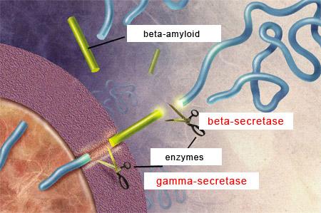 Risultati immagini per Amyloid