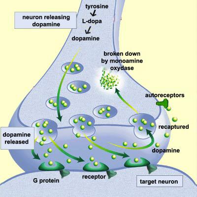 cymbalta dopamine