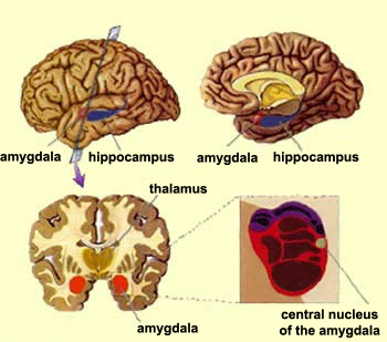 The brain from top to bottom ccuart Choice Image